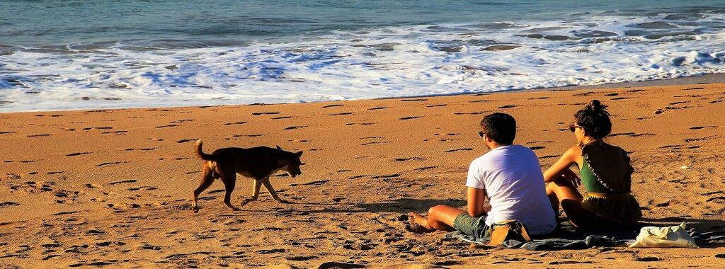 The Best Dog Beaches In Tuscany