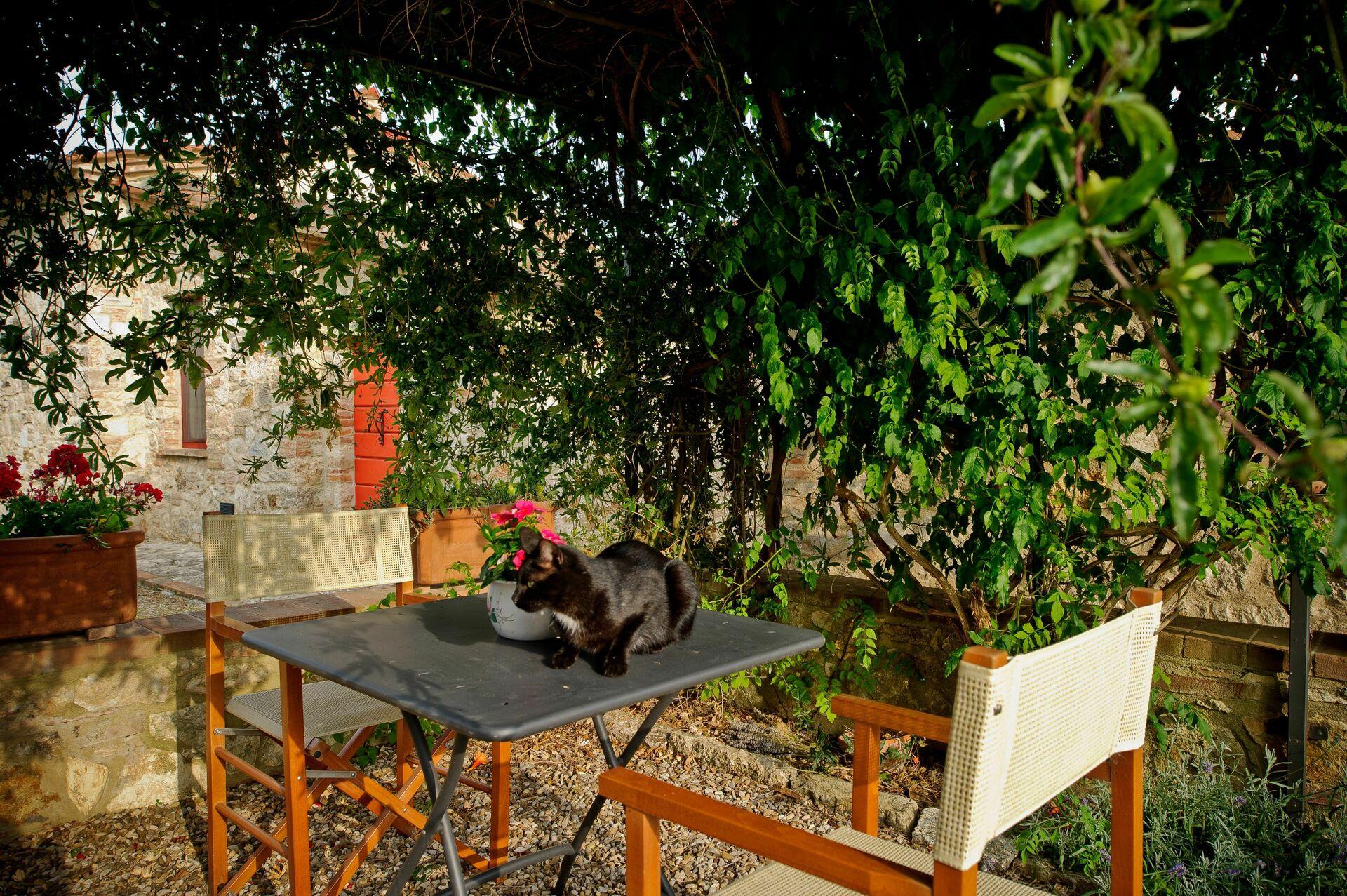 maison de campagne louer pour les vacances en toscane podere pereto. Black Bedroom Furniture Sets. Home Design Ideas